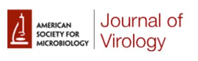 Journal of Virology Logo